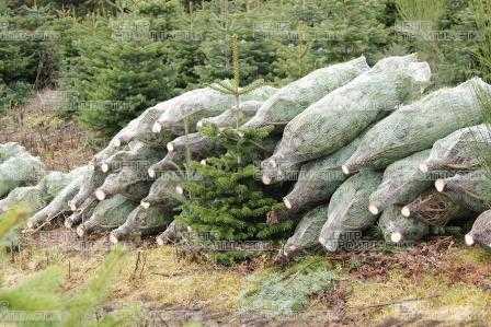 Сетки для упаковки елок